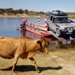 To exit Makgalagadi, you have to cross the Boteti River on a ferry.