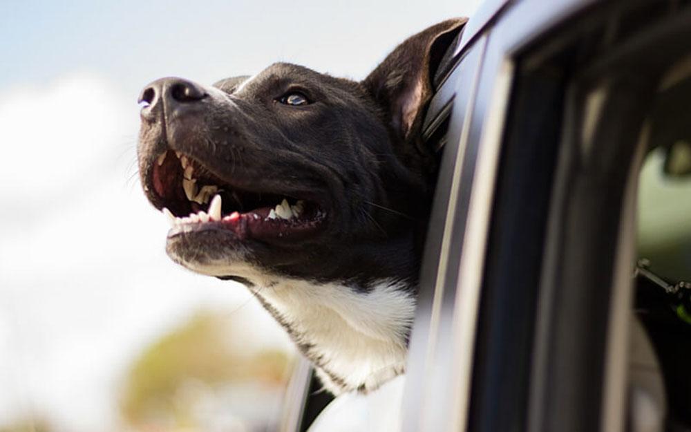 dog-in-car-2