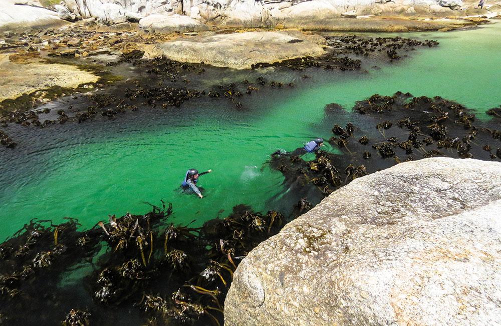 kelp-beds