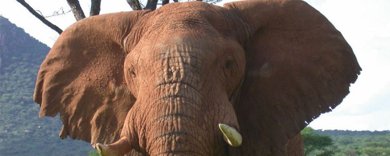 Bakkie trashed by elephant