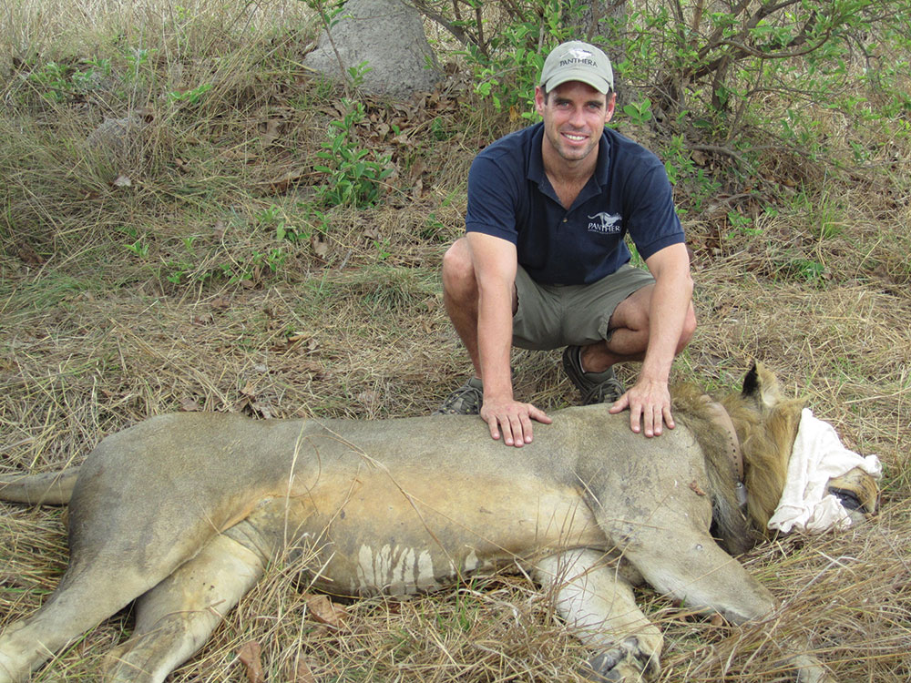 lion-last-collaring